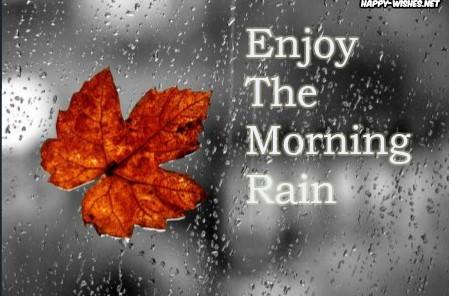 Morning Rain Images