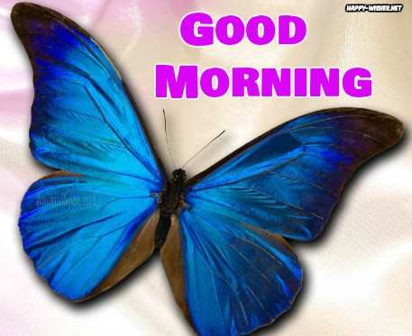 Shining Butterfly Good Morning images