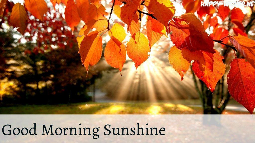 Sun ray under the tree good morning suns hine