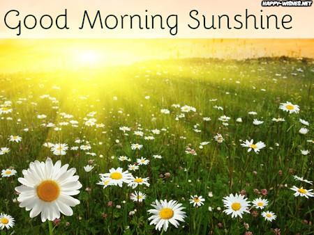 Sun rays in the field Good mornig sun shine images