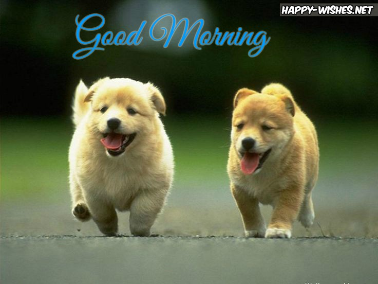Wake up its morning cute puppy Good morning images