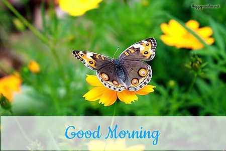 Yellow Butterfly Good Morning images
