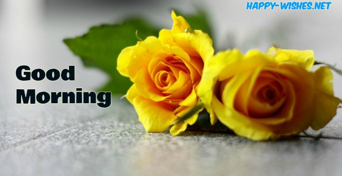 Yellow Roses Good Morning Images