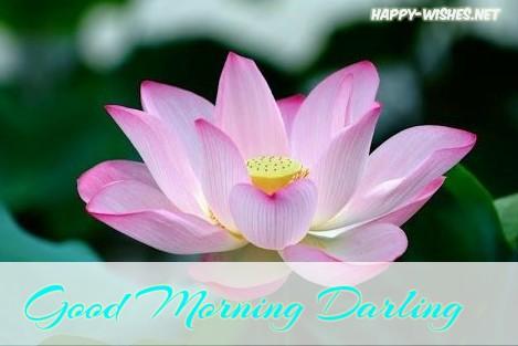 beautiful lotus flower good morning Darling images