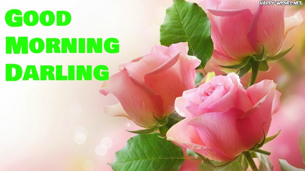 beautiful pink rose in Good morning Darling images