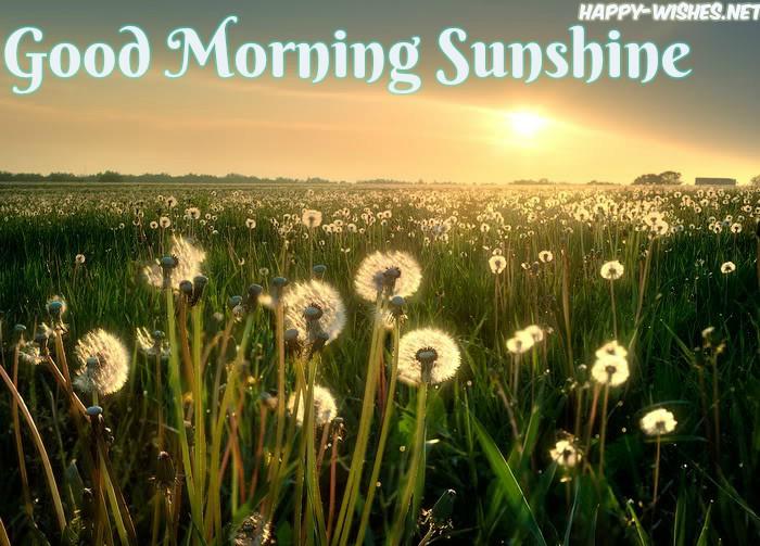 beautiful-sunshine Good morning images - Copy