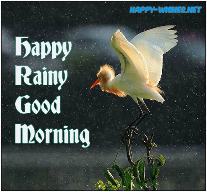 Good morning rainy images with birds