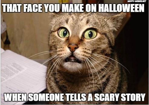 Funny cats Happy Halloween Memes