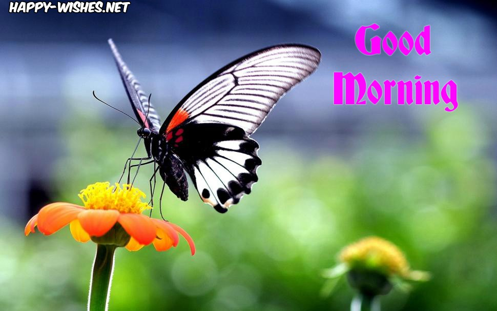 nice Good morning Butter fly Images