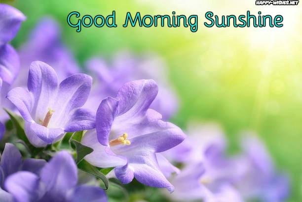 viloet flower Good morning sun shine images