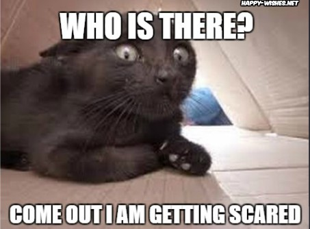 Cat Getting Scared on Halloween