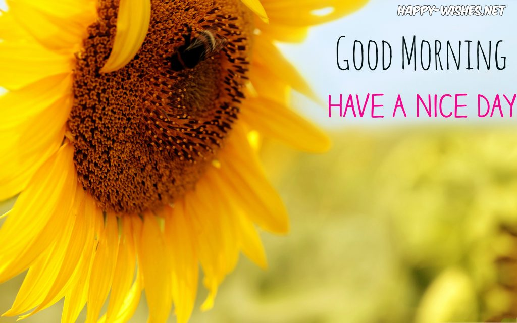 Beautiful Sunflower Images With Good Morning Images