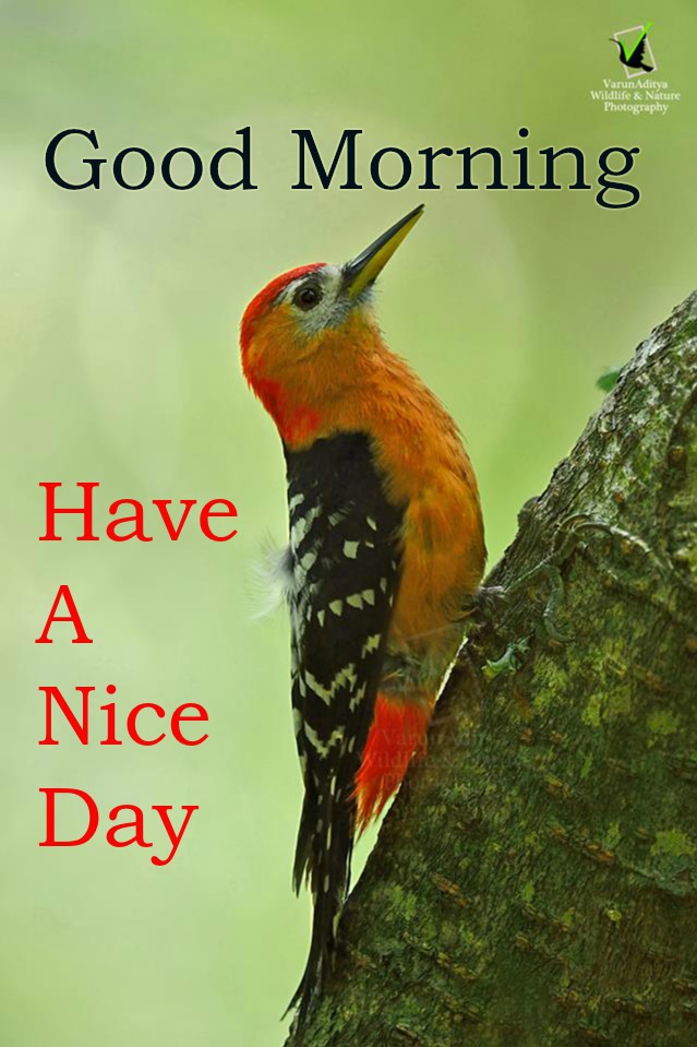 Best Good Morning wishes with Bird Images