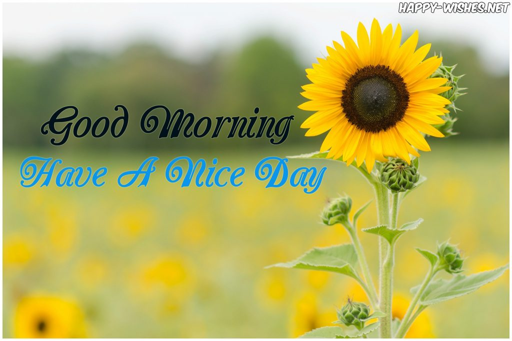 Best Sunflower Good Morning Image