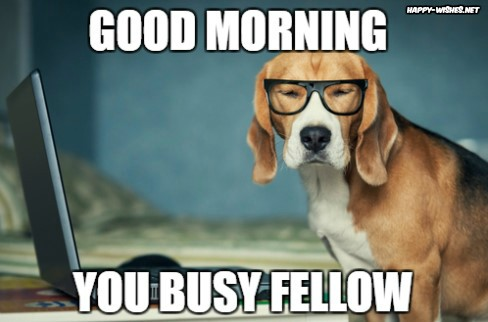 Busy dog Good Morning images