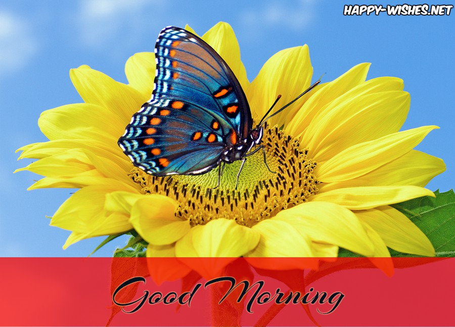 Butterfly on Sunflower Good Morning images