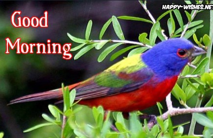 Colorful Morning Bird images