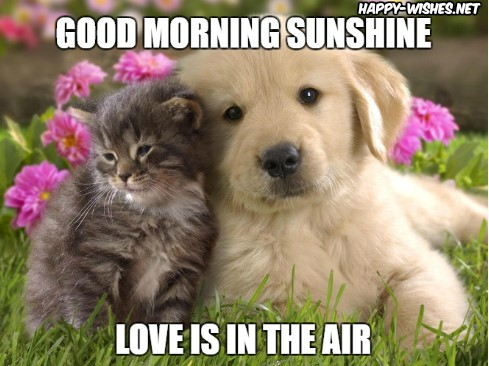 Cute Picture of Cat and Dog Images