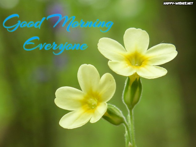 Cute flower Good morning Everyone images