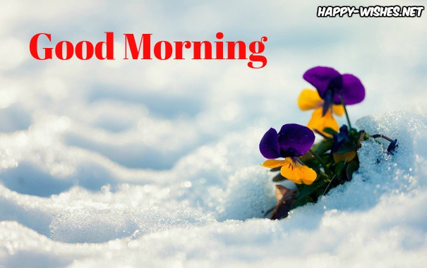 Cute flower on the snow Good Morning Images