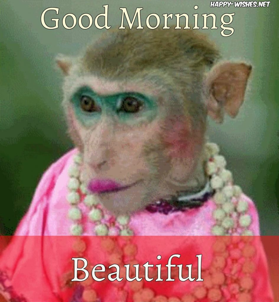 8 Good Morning Wishes With Monkey Images