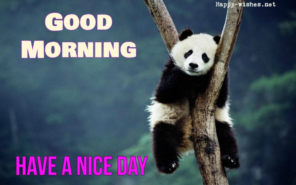GOOD MORNING wishes with panda images