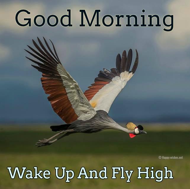 Good Morning Bird Images