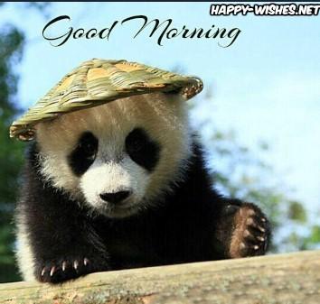 Good Morning Chinese Panda Images