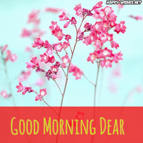 Good Morning Dear images with pink flower background