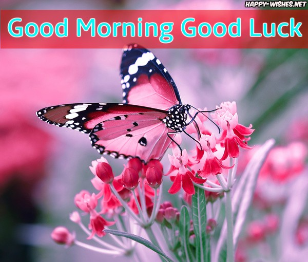 Good Morning Good Luck Images with butterfly images