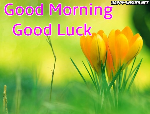 Good Morning Good Luck Images with flower image