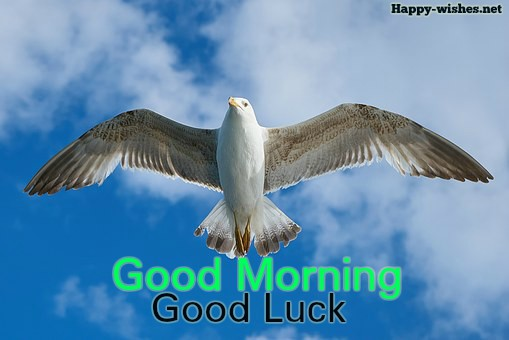 Good Morning Good Luck Images with flying bird image