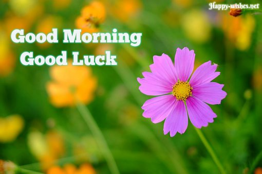 Good Morning Good Luck Images with pinkflower images