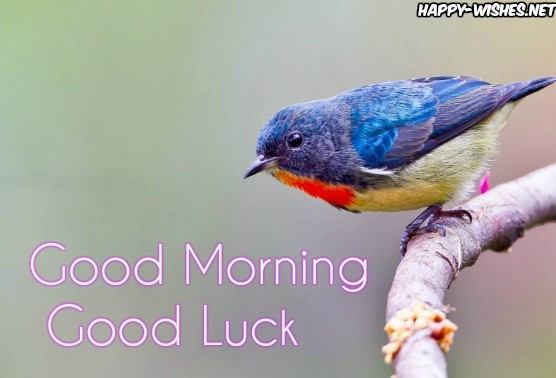 Good Morning Good Luck with bird images