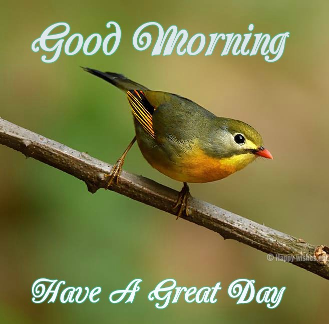 20 Good Morning Wishes With Bird Pictures