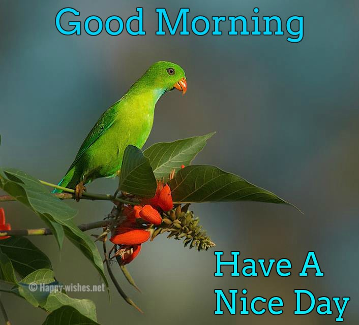 Good Morning Have a NIce Day images with Bird images