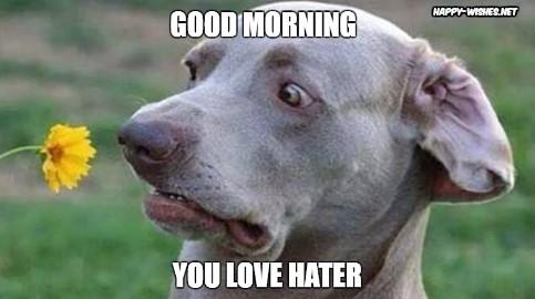 Good Morning Meme for him love hater