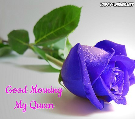 Good Morning My Queen With Blue Rose images