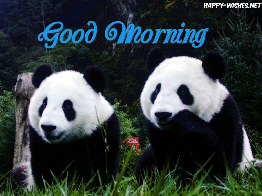 Good Morning Panda Coupel Images