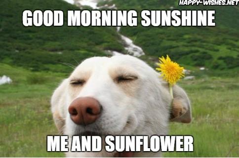 Good Morning Sunshine Meme with Funny Dog images