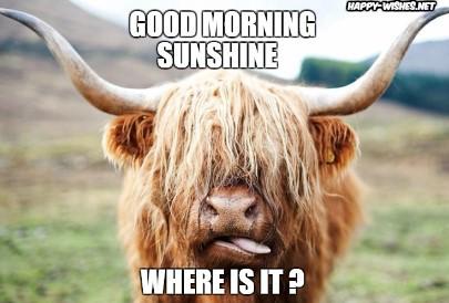 Good Morning Sunshine Yak Images