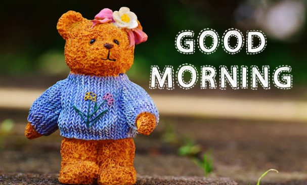 Good Morning Teddy Wishes