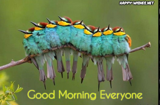 Good Morning To all wishes with Bird in Group Images