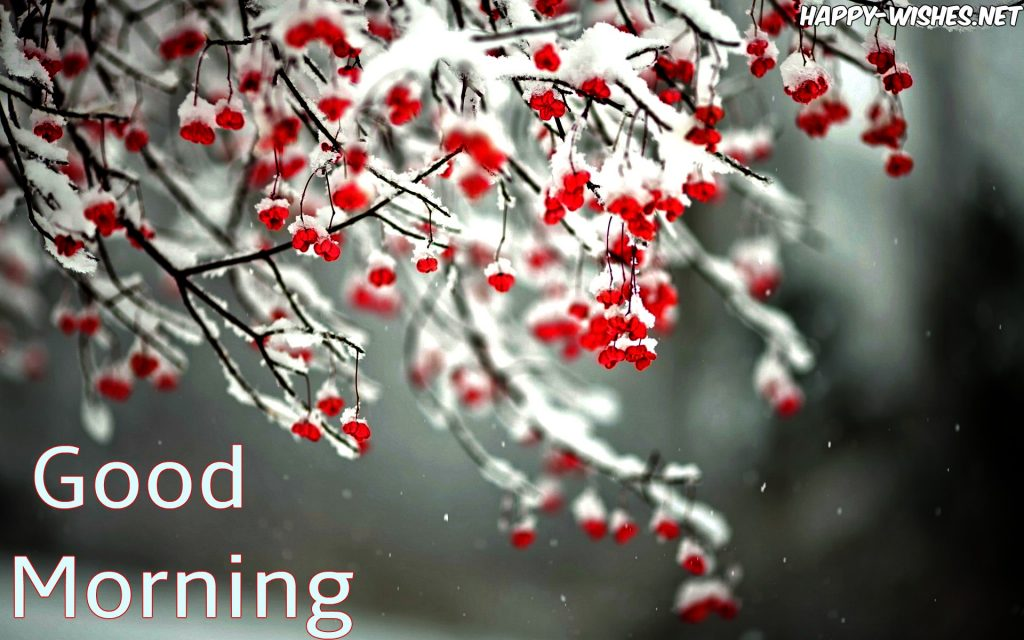 Good Morning Winter Images with Snow On Tree