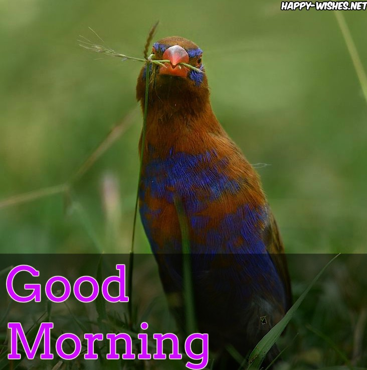 Good Morning Wishes With Bird Eating Food Images
