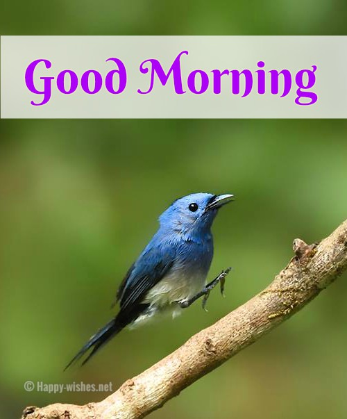Good Morning Wishes With Bird Images