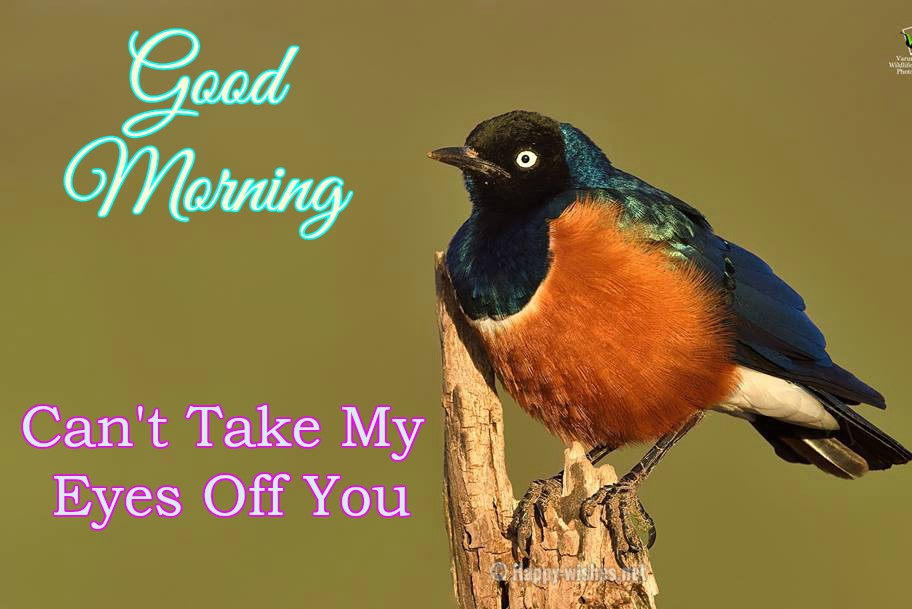 Good Morning Wishes With Colourful Bird Images