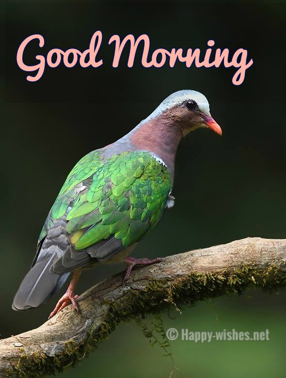 Good Morning Wishes With Green Bird Images