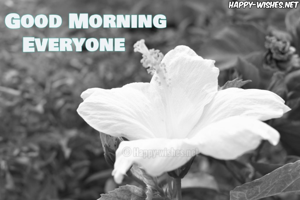 Good Morning Wishes With White flower