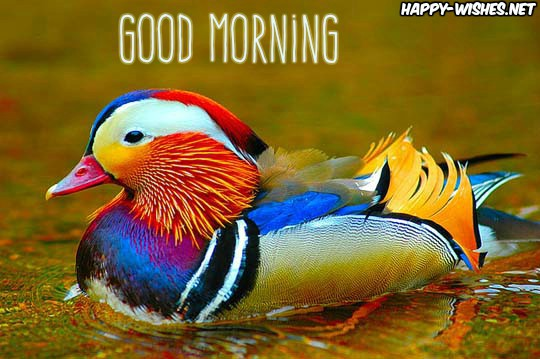 Good Morning Wishes With colourful Duck Images